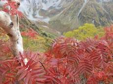 贈答・プレゼントにも。こだわり高級無添加 冷凍パスタソース専門店・おとりよせのナチュラルグレースメルカートのブログ 紅葉の涸沢登山に行ってきました!紅葉1